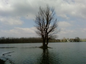 alone, tree, water
