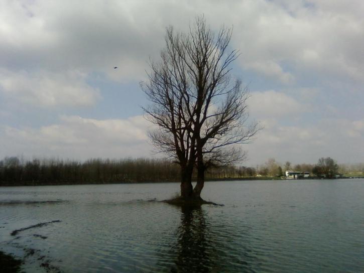 một mình, cây, nước