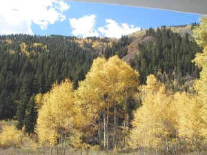 aspens, fall, shultz, pass, road, near