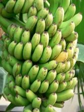 groen, bananen