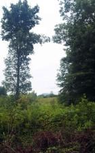 grand, vert, arbre
