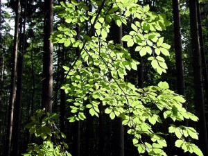branch, green leaves, forest, sunny day