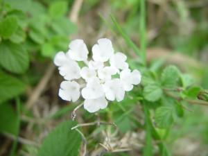 lumineux, fleurs blanches, centré, vert, brun, fond