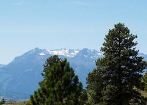 jehličnatý strom, Busch, Hora