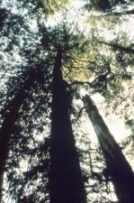 godshawk, Pflanze, Wald