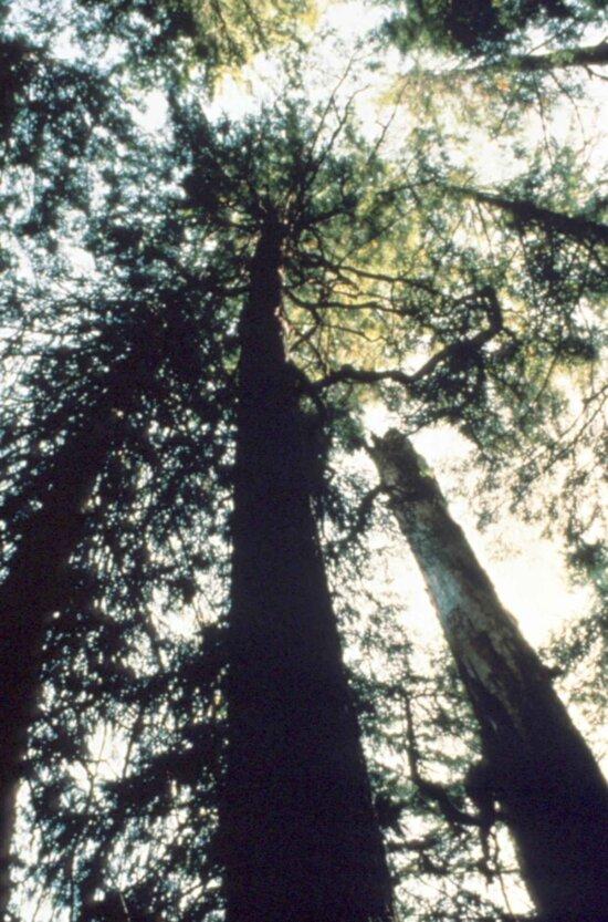 godshawk, plant, woods