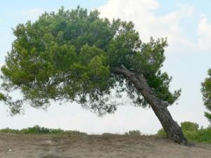 penchant, arbre, plage