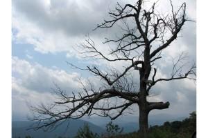 arbre solitaire, négliger, shenandoah, parc national
