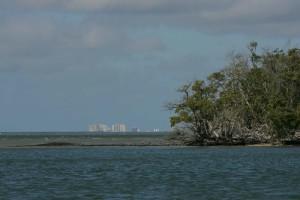 mangrove, trees, growing, island
