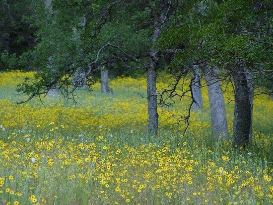 flowers, fields, forests, oaks