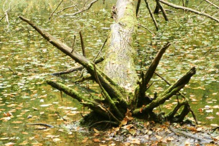 old, tree, field