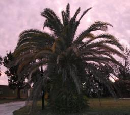 sôi động, palm tree, hoàng hôn