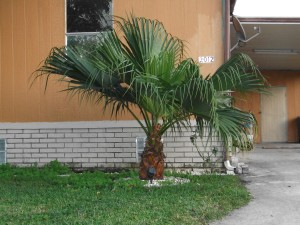 small, palm tree, sort