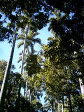 古代, palmtrees, 博物馆, 共和, 里约热内卢