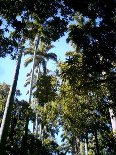 anciens, palmtrees, museu, republica, Janeiro