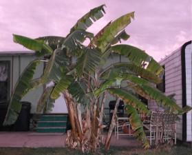 grand, palmier, rue