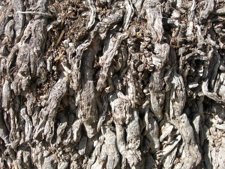 già, màu xám, cây cọ, rễ