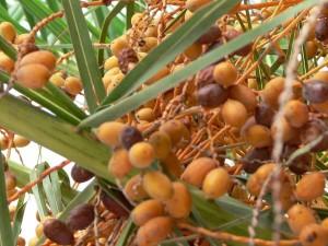 màu da cam, cây cọ, hoa quả