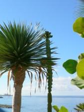 Palm, kaktus