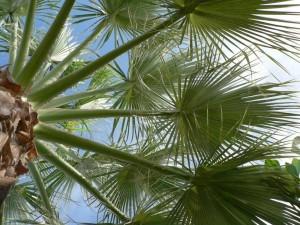 palm tree, leaves, green