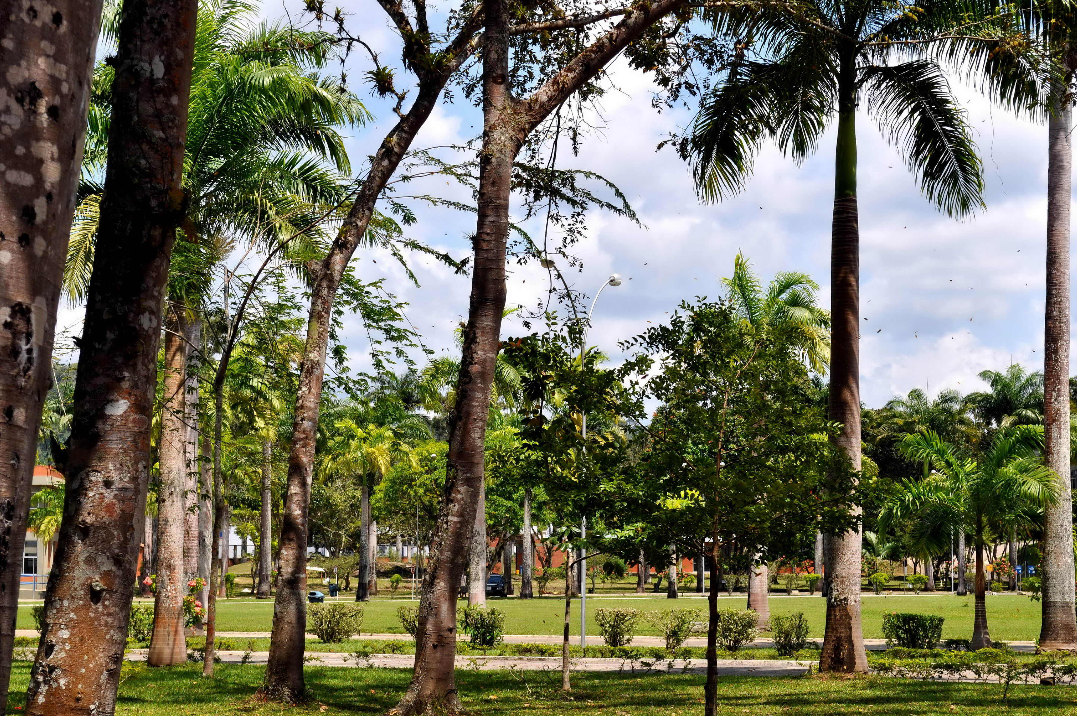 Free photograph; tropical, green, palm, trees, park