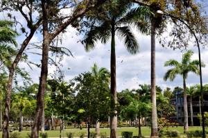 열 대 야자수, 공원