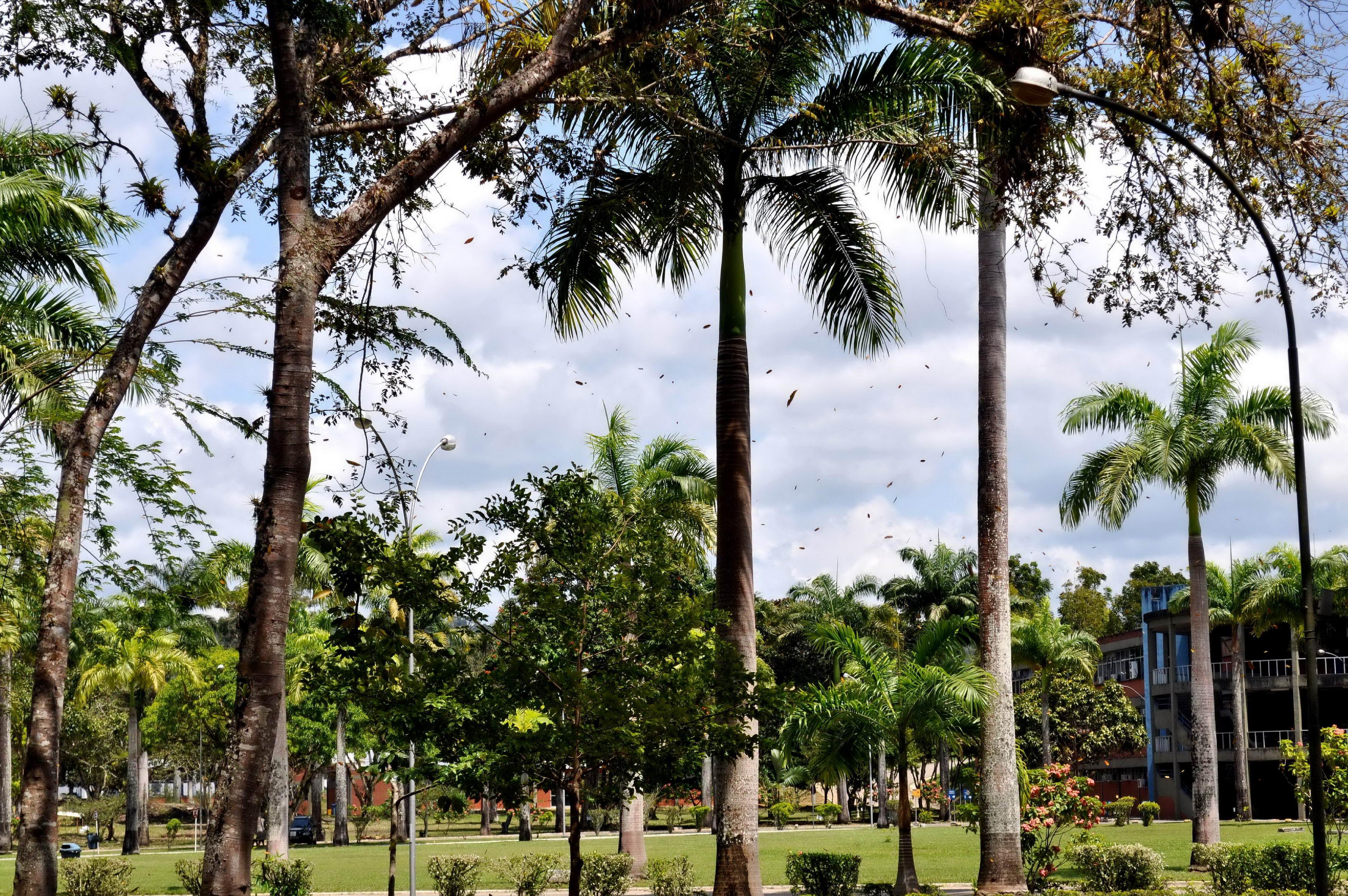 Free photograph; tropical, palm, trees, park