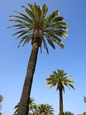 zwei, Palmen, blau, Himmel