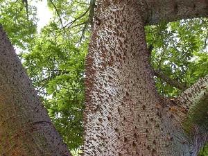 spikes, trees, leaves