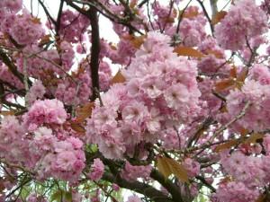 våren, treet, blomst