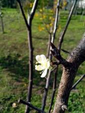дърво, цъфтящи, пролет, флора