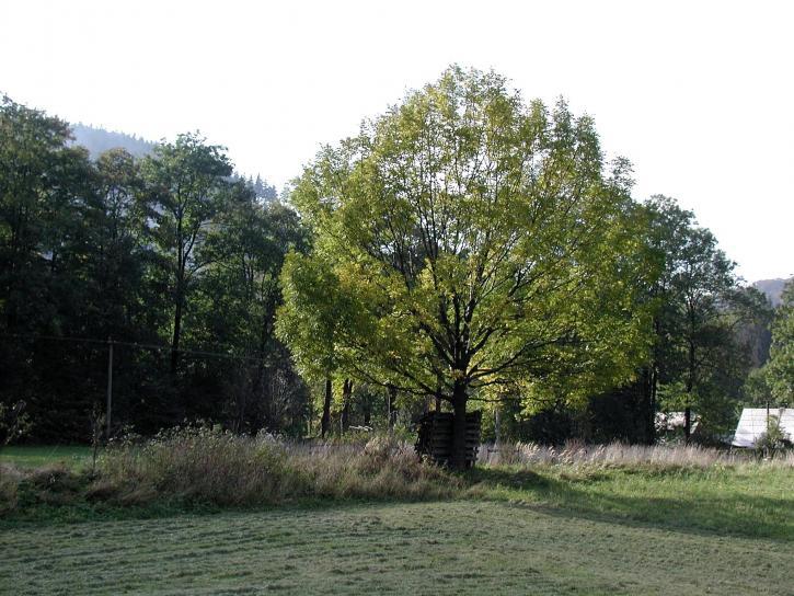 arbre, parc national