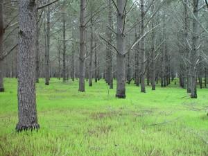 arbre, plantation