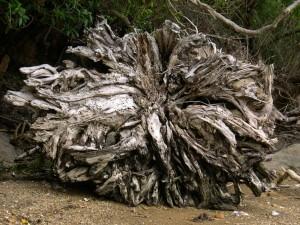 tree, roots