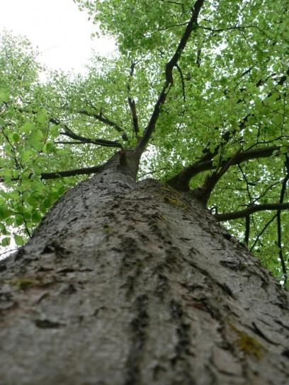 tree, view