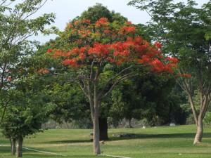 tree, orange flowers