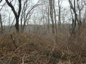 trees, underbrush, fallen, leaves