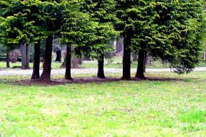 bomen, stad en park