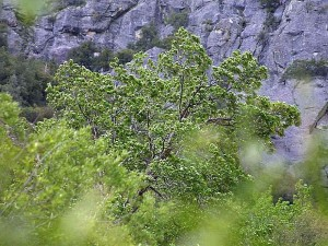 trees, leaves, cliffs