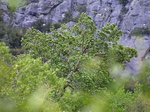 des arbres, des feuilles, des falaises