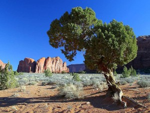 trees, monument, valley, mesas, buttes