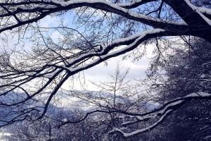 alberi, neve
