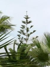 tropicales, les arbres