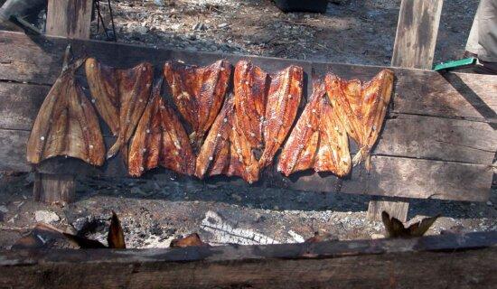 grill, smoked, meat, fish, alosa sapidissima