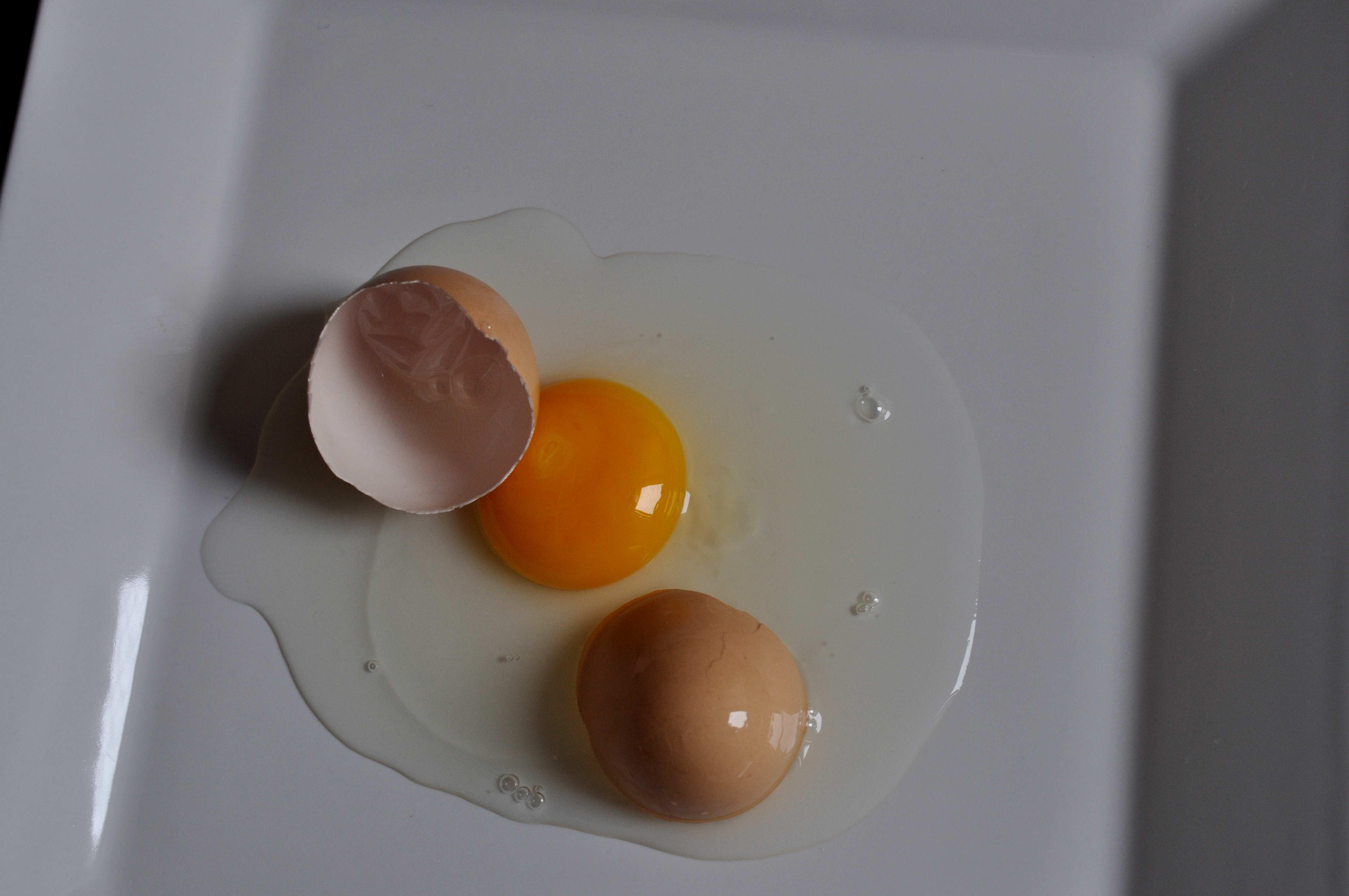 Free photograph; chicken, egg, broken