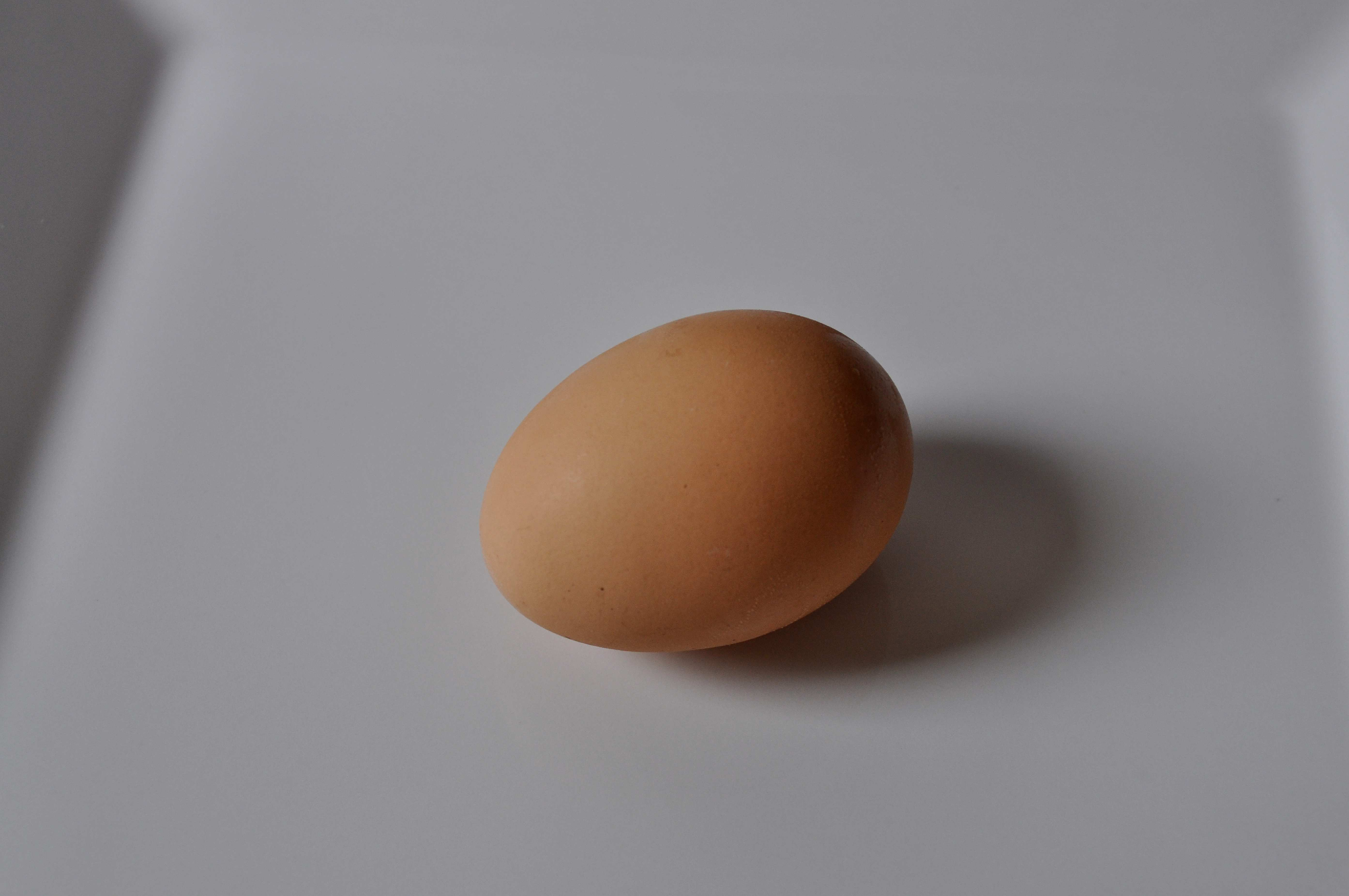 Free photograph; chicken, egg, white, background