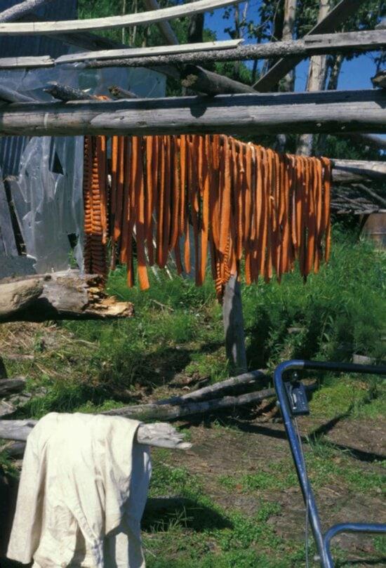 fish, drying, racks, sun
