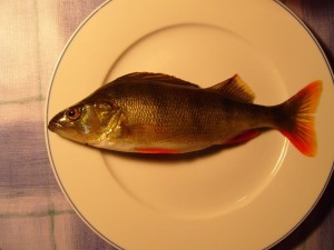 poissons, dîner