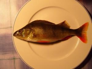 fish, dinner