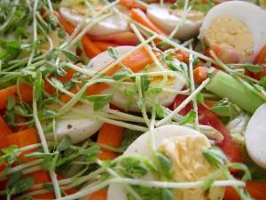 nourriture, salade